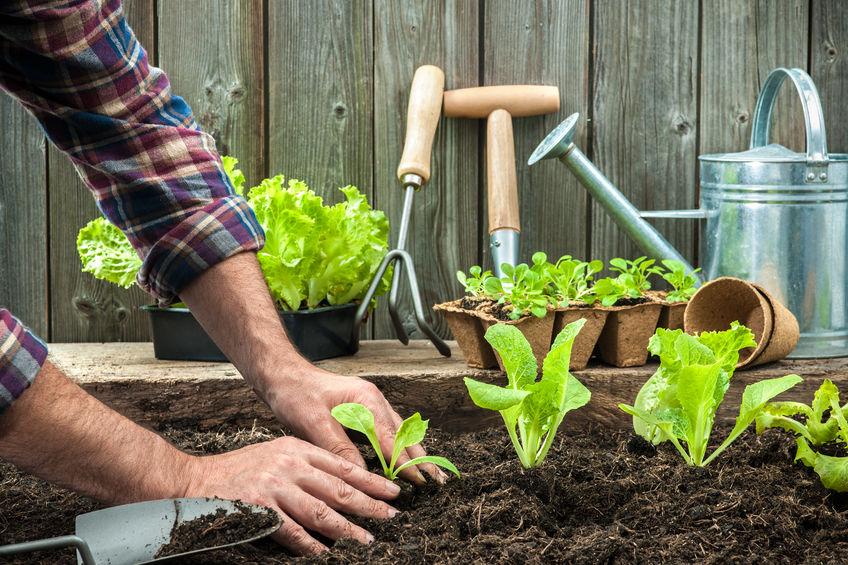 gardening | Constellation Nutrition