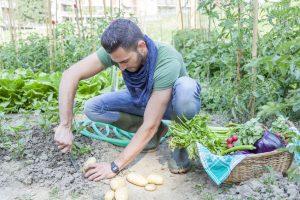 vegetable garden | Constellation Nutrition
