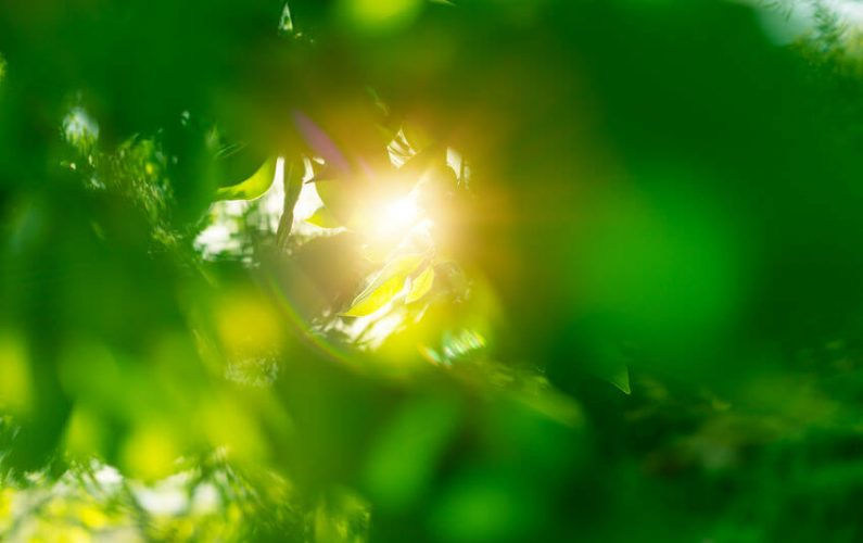 The Sun, Vitamin D, And Mental Health: What Is The Relationship?